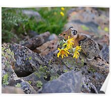 Pika Carrying Wildflowers Poster