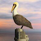 Brown Pelican  by Walter Colvin