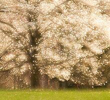 Magnolia Splendor by sundawg7