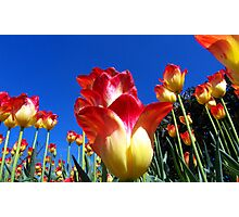 It's A Tulip Sky Photographic Print