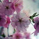 This is why I love spring by LudaNayvelt