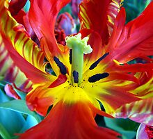 Inside the Tulip by Rick Lawler