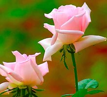 THE YOUNG ONES - ALL IN PINK - PINK ROSE by Magaret Meintjes