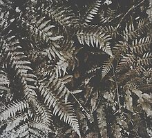 Forest Fern by Kitsmumma