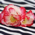 Poppies and Stripes by coffeebean