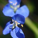 A Blue Blur by Cydell