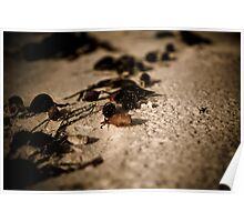The Sand at my Feet Poster