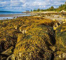 Seaweed on the Beach by mlphoto