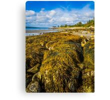 Seaweed on the Beach Canvas Print