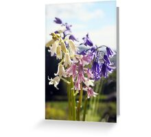 Tricolour Bells Greeting Card