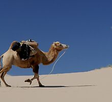 Camel by franceslewis