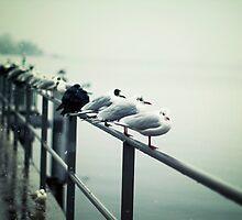 Seagulls 1 by BryanLee