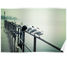 Seagulls 1 Poster