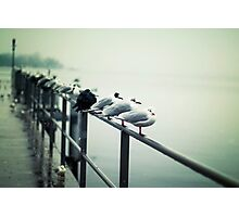 Seagulls 1 Photographic Print