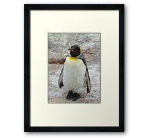 Sleeping Penguin Framed Print