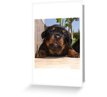 Paws for Thought: Rottweiler Puppy. Greeting Card
