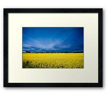 Golden Canola Framed Print