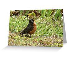 Fat Robin Greeting Card