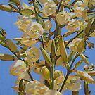 Yucca In Full Bloom II by Catherine Kuzma