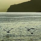 Three seagulls by Barbara  Corvino