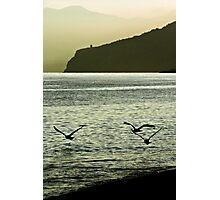 Three seagulls Photographic Print