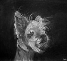 Chinese Crested by Dandelion Dilluvio