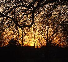 SUN IN THE FOREST by Deirdre Banda