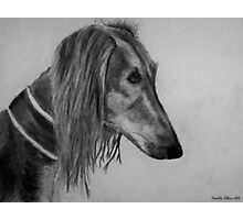 Saluki Photographic Print