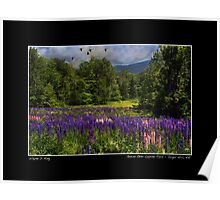 Geese Over Lupine Field Poster Poster