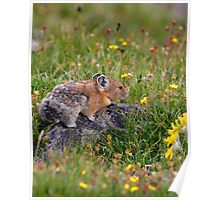 Pika & Wildflowers Poster