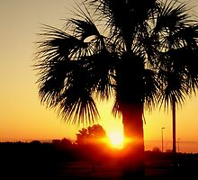 Palmetto by Emilie Baltimore