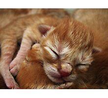 Newborn Kitten Sleeping Photographic Print