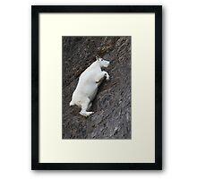 Mountain Goat on the Edge Framed Print
