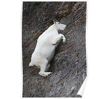 Mountain Goat on the Edge Poster