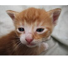 Close-up of Kittens Face Photographic Print