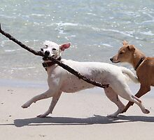 Dogs on the beach by franceslewis