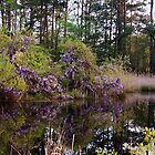 Wisteria Lake by Angel Perry