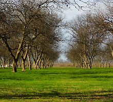 The Pecan Orchard by WildestArt