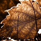 Autumn Shadows by Ron Moss