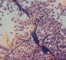 Washington Monument Through the Blossoms by Kadwell