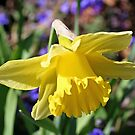 """""""Yellow Beauty"""" by Lynn Bawden"""