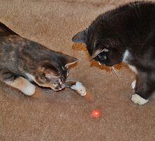 Feline Laser Tag by Eileen Brymer