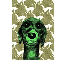 GREYHOUND THOUGHTS Photographic Print