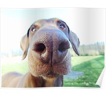 Giant dog nose Poster