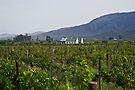 Vineyard Farmhouse by RatManDude