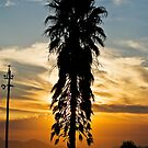 Tall Palm Silhouette at Sunset by RatManDude