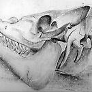Skull Bones of a Boar - II by Maren Spreemann