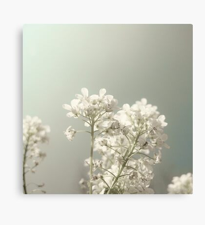 Pure Spring Canvas Print