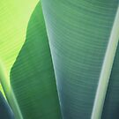 Plantain #1 by ALICIABOCK