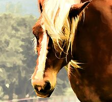Draft Horse by kcd-designs